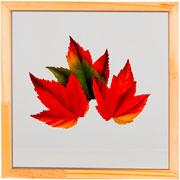 Quadro de vidro folha II 27x27 cm
