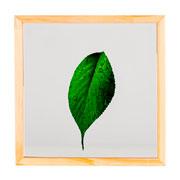 Quadro de vidro folha verde 27x27 cm