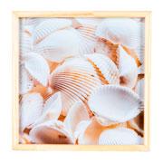 Quadro de madeira conchas 32x32 cm