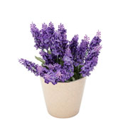 Vaso em cerâmica Cone Flowers bege 12,5 cm