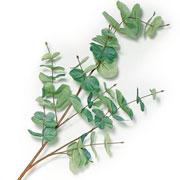 Planta permanente 89 cm