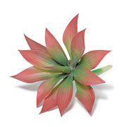 Planta suculenta permanente 17 cm